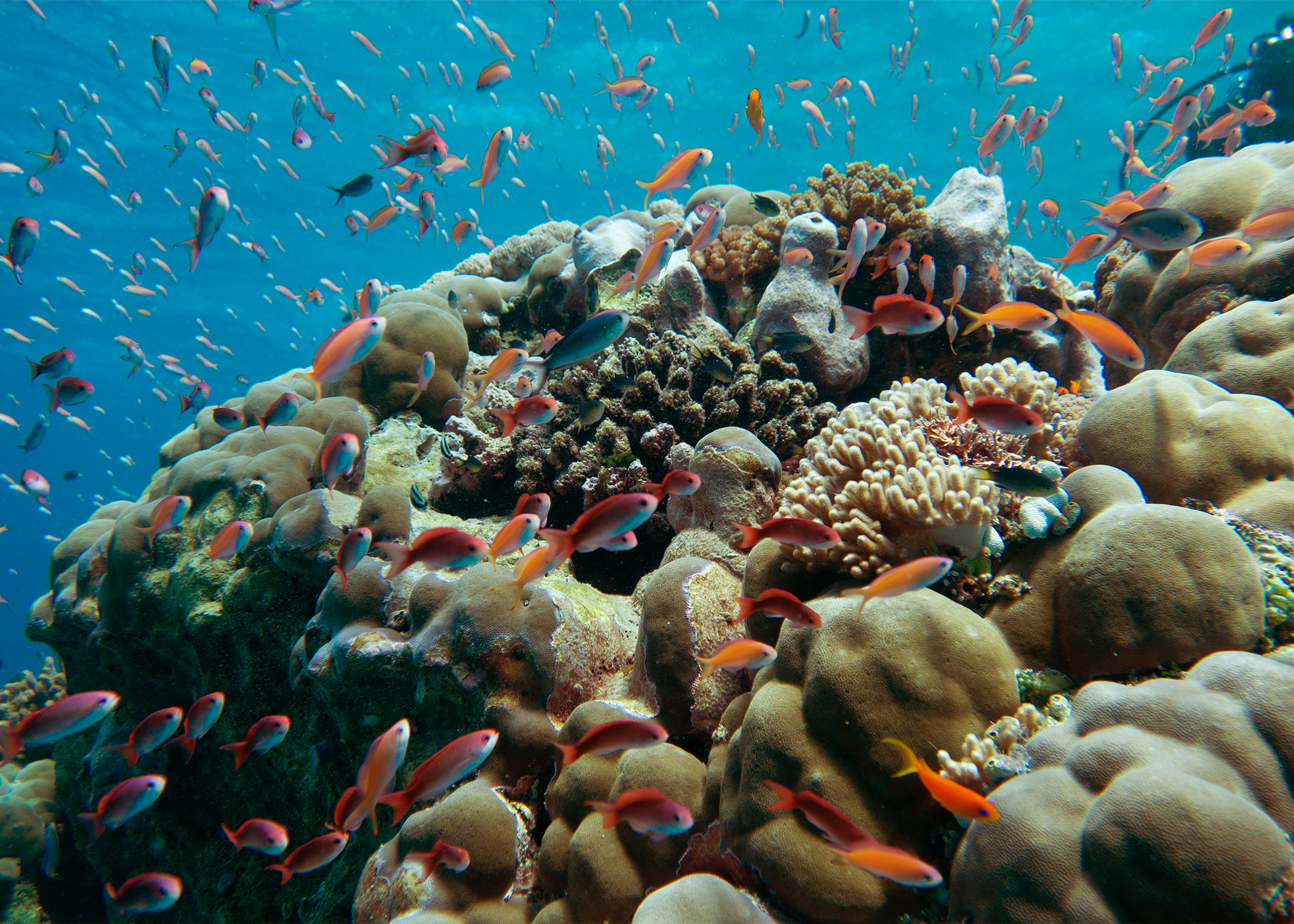 A healthy coral reef community in action