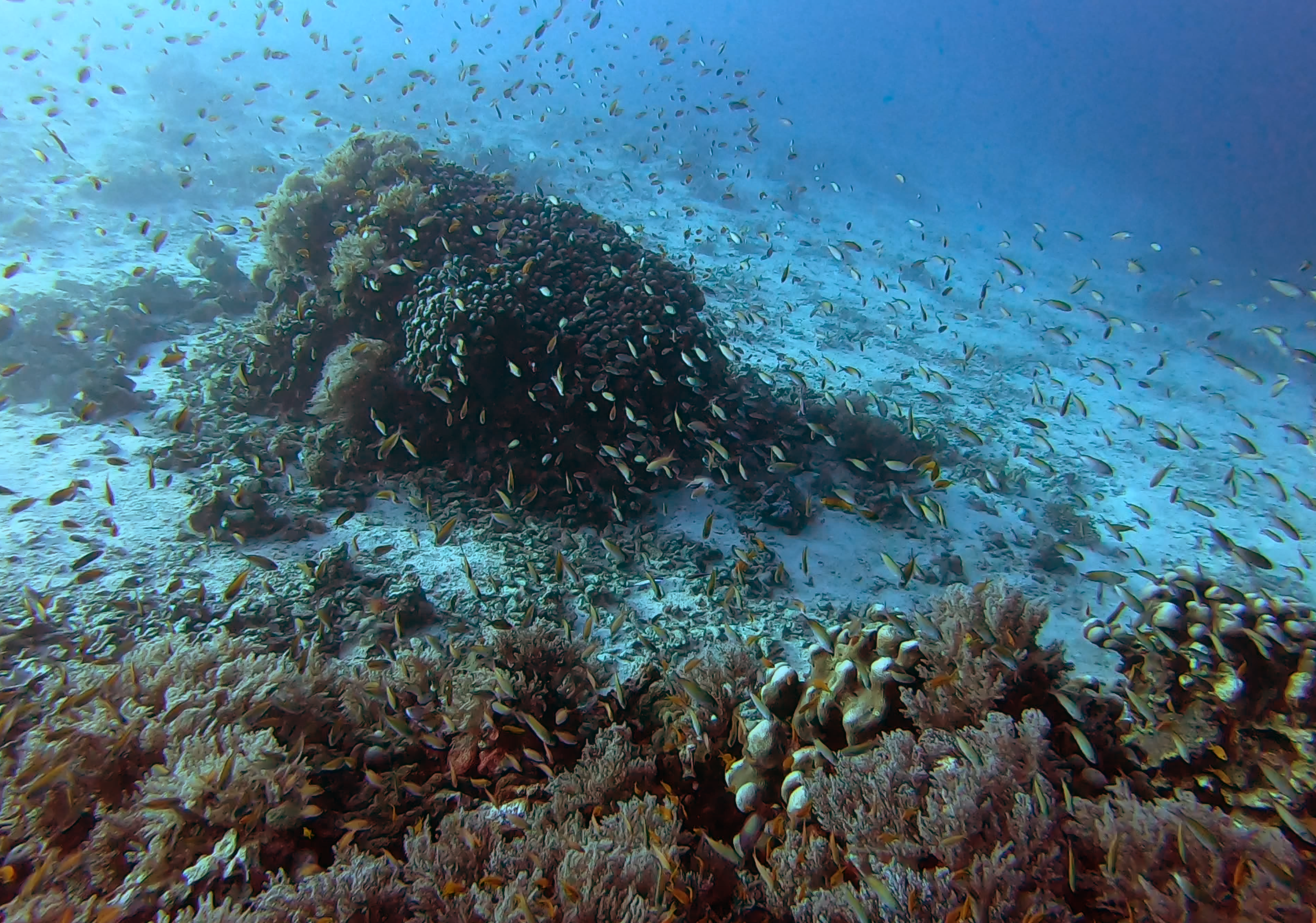 An area filled with living coral, and the bountiful fish population drawn to it