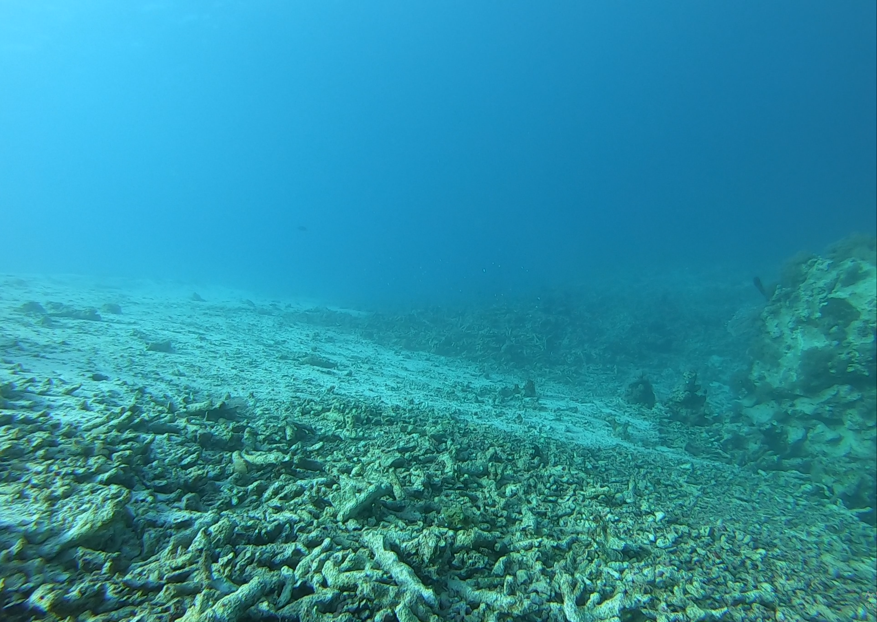 A similar area of destroyed coral, with no fish present