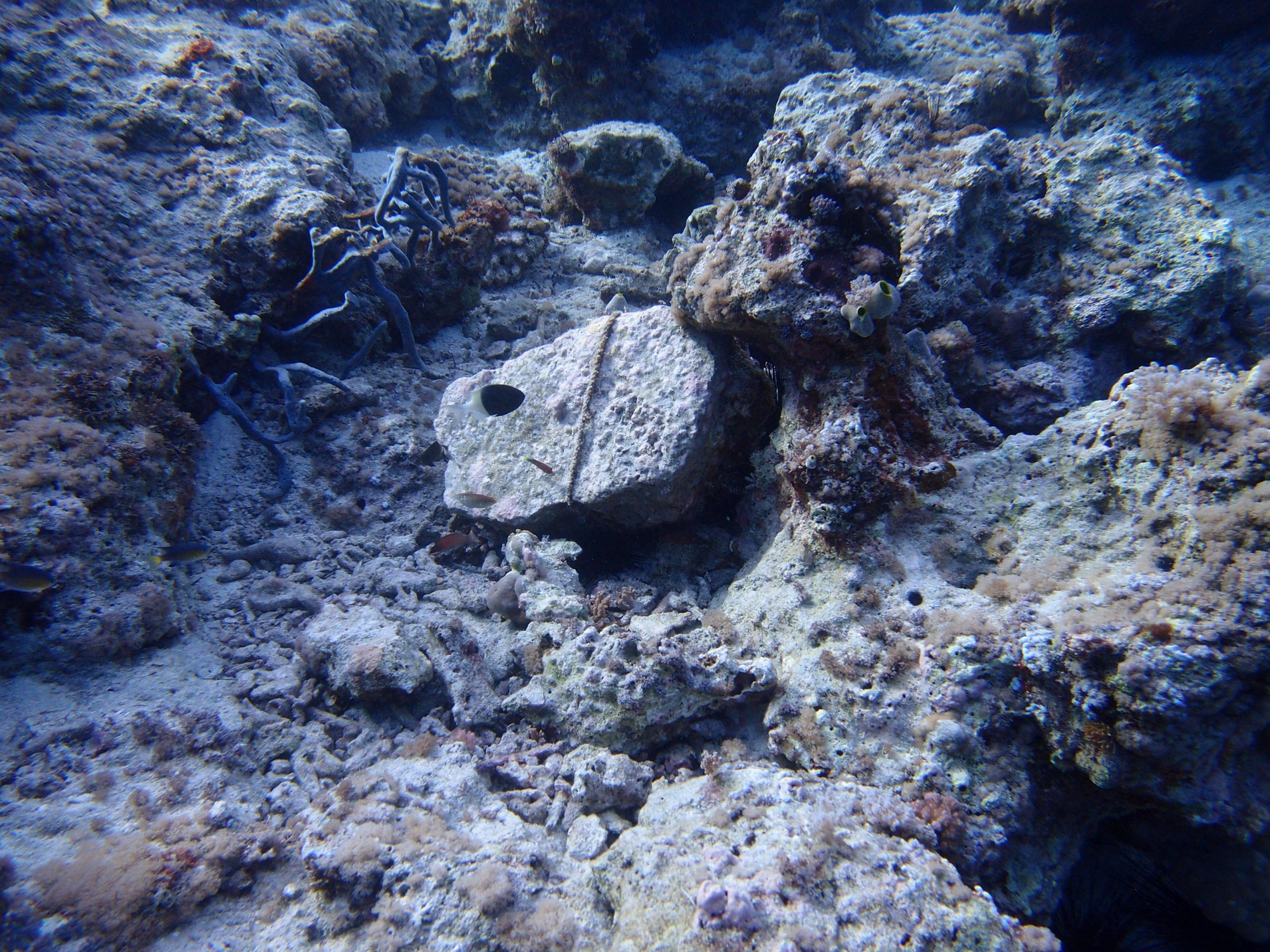 An anchor stone that has landed in the middle of some corals, destroying them