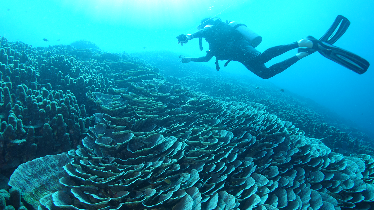 One of the beautiful coral reefs of Pemba, which we hope to preserve for many generations to come